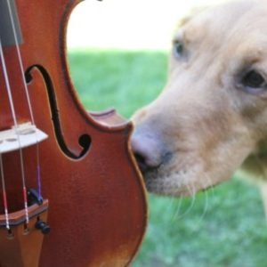 바이올린님의 프로필 사진